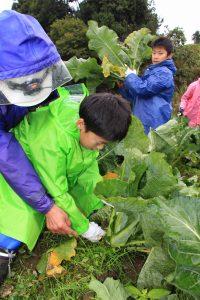 越後おぢや 南小学校収穫体験