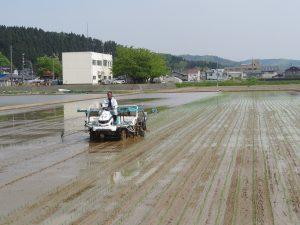 越後さんとう 出資型法人2年目の水稲生産始動