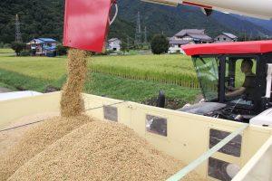 魚沼みなみ 米の収穫始まる