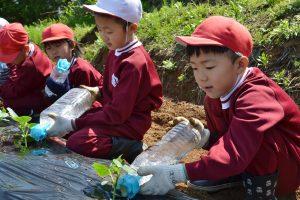 十日町 学校農園
