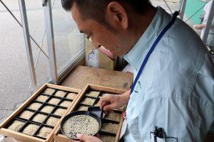 胎内市 米の個袋初検査